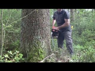 Exploitation de gros bois en présence de régénération