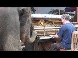 Scott Joplin for a Young Elephant