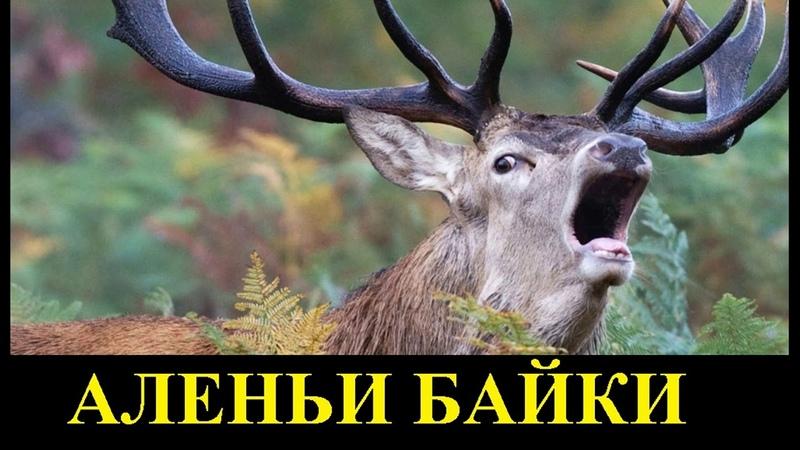 Аленьи байки 6. Плати алименты на чужого ребенка и ничего не чувствуй!
