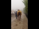 Justify bouncing back to the stakes barn. Preakness