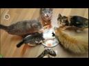 Приколы с котами 2018. Смешные коты.