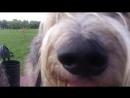 Пёс Тотоша Große Nase