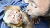 Baby Monkey Falls Asleep Talking to Big Brother! (CUTE)