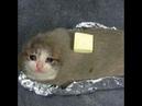 Sad Cat meme😔😔