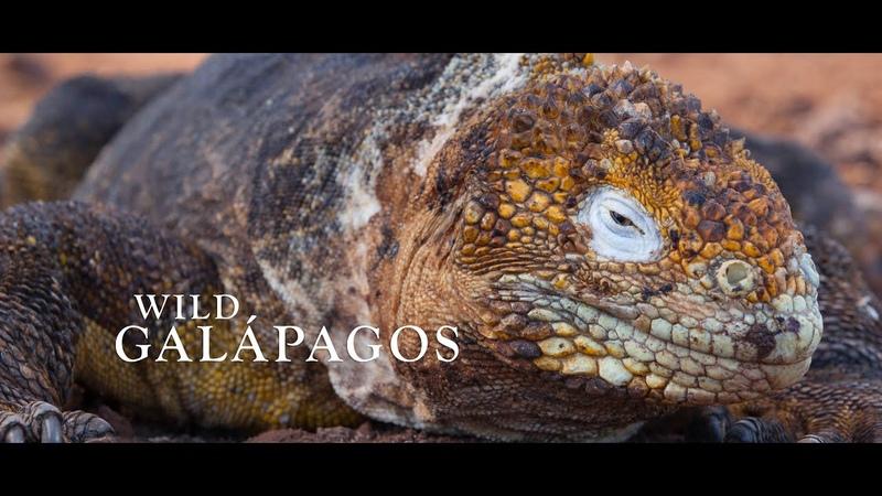 Wild Galápagos
