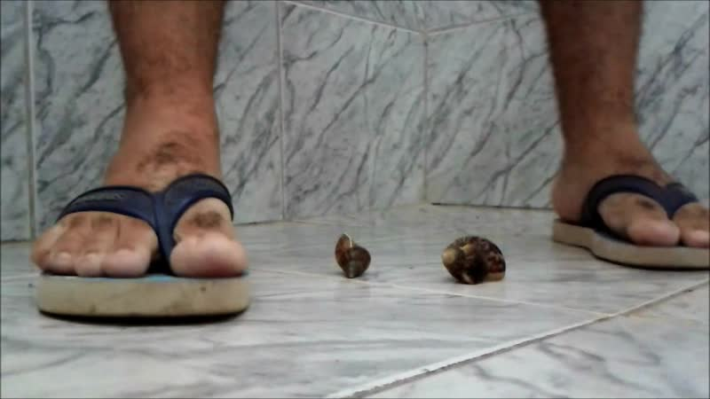 Crushing insignificant snails with Havaianas 80kg