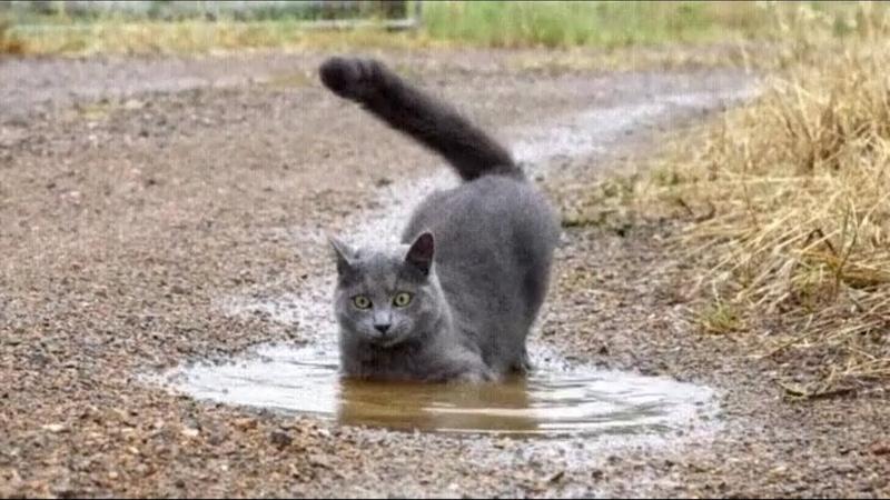 Приколы с котами и кошками 2019 - Приколы с животными 2019. Часть 2