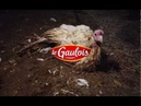 EARL BARBEYER : élevage de dindes Le Gaulois