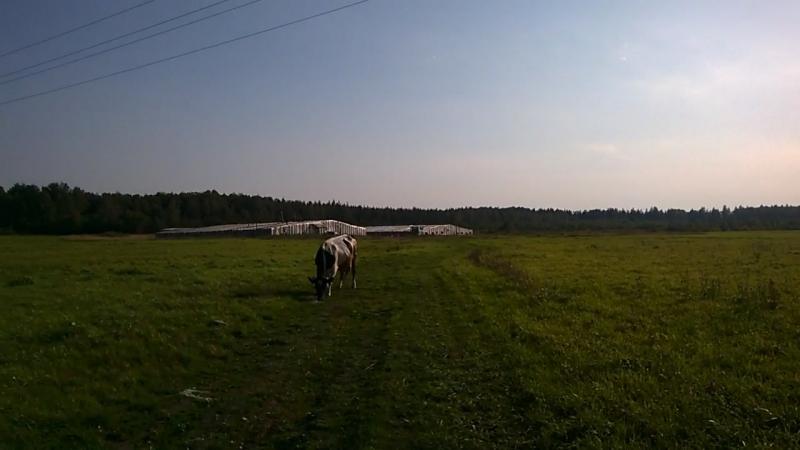 Теплицы в п.Ириновка (1600м и 800м)