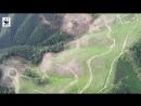 Активісти Лісової варти WWF виявили масштабні суцільні рубки в Усть Чорнянському лісництві