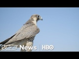 A Master Falconer Shows How His Bird Protects Valuable U.S. Crops (HBO)