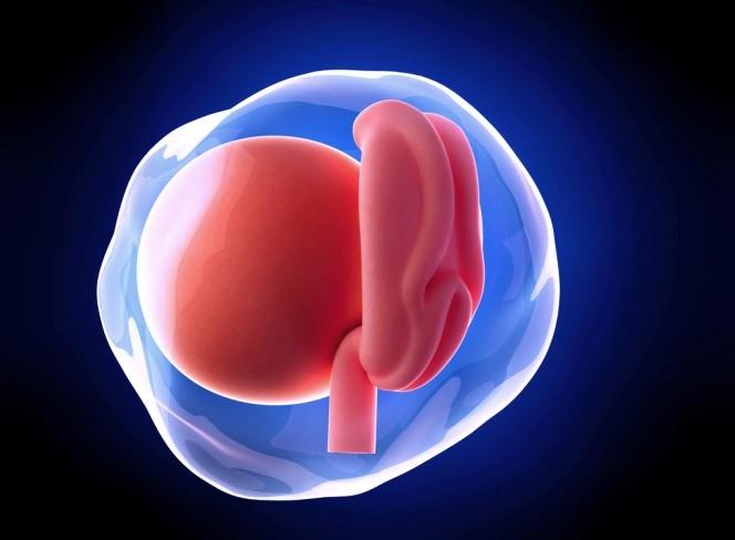 Первый месяц беременности: симптомы, ощущения, что происходит с организмом