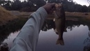 Topwater Bass Fishing at Bass Pond - Henry Coe State Park