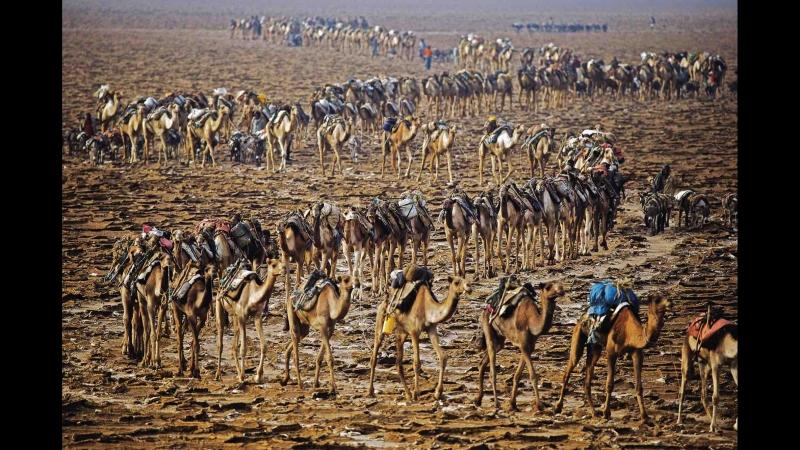 Племя Афар. Эфиопия