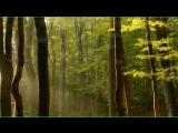 Шикарно! Relaxing Music- ДиДюЛя популярнее, но это лучше! Yakuro. МУЗЫКА ДЛЯ ДУШ (1)