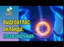 Анатомия человека Видеоатлас доктора Акланда Позвоночник и спинной мозг