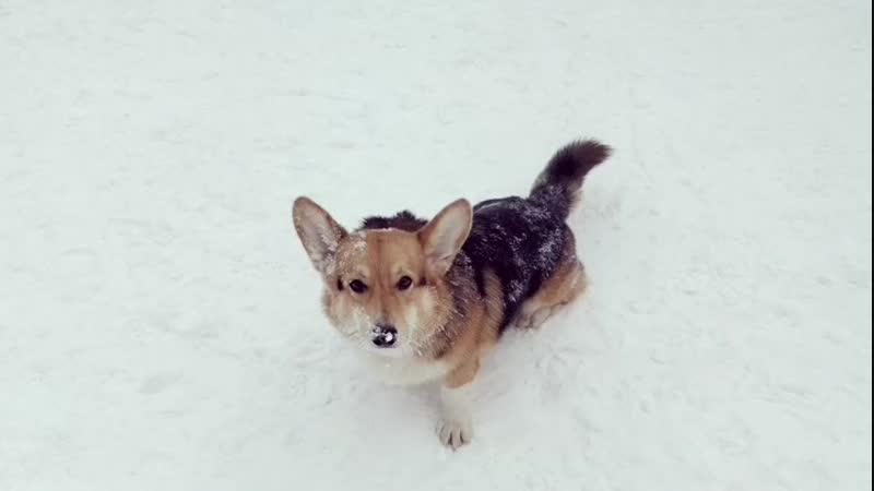 Мерлин любит снег и одиночество