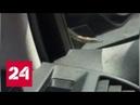 Зайцем до Москвы водитель обнаружил змею прямо на лобовом стекле Россия 24