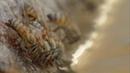 Сезон дождей в пустыне Сонора 13 10 20 50 СЕВЕРНАЯ АМЕРИКА ИЗГНАННИКИ И СКЕЛЕТЫ