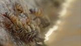 Сезон дождей в пустыне Сонора 13.10 - 20.50 СЕВЕРНАЯ АМЕРИКА - ИЗГНАННИКИ И СКЕЛЕТЫ