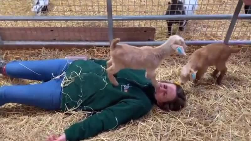 WomaN gEt BruTaLlY tRampleD BY gOatS