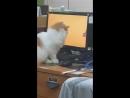 Кот смотрит мультики (VIDEO ВАРЕНЬЕ)