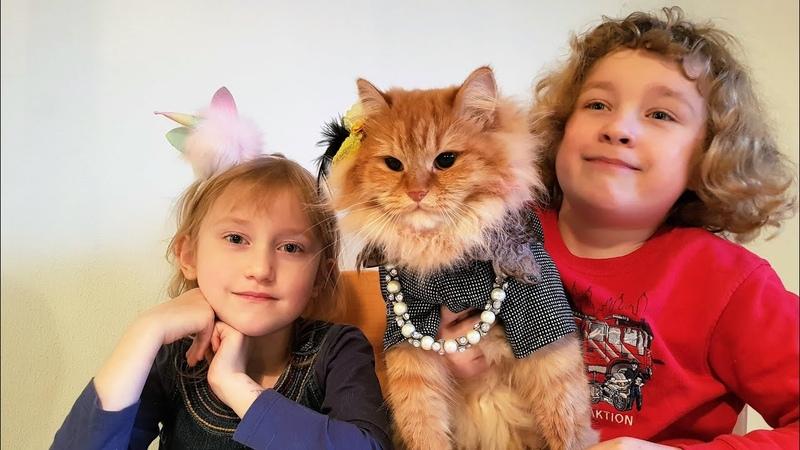 Наряжаем и расчёсываем кошку Бьюшу, dress and comb the cat