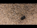 Antlion and burrowing bug