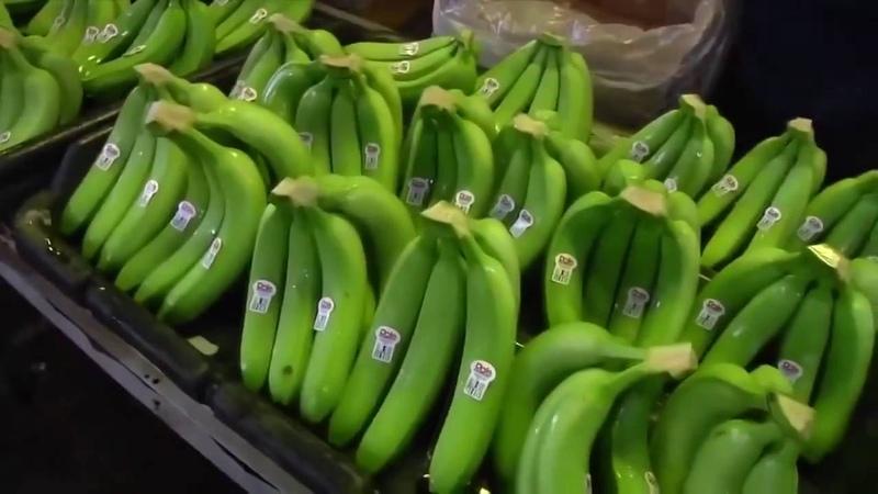 Как выращивают бананы, современная банановая ферма