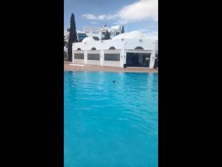 Тунис хамамет 2018