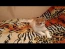 Леопольд и валяние на диване