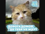 Кот Тоби нашел дорогу домой, но хозяева собрались его усыпить