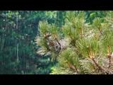 Relaxing Nature Sounds Inspiring thunderstorms &amp bird sounds in summer - Live 247