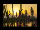 Summer Sun - Robert Louise Stevenson
