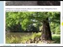 Быль - Факт о потопе в фотографиях и комментариях