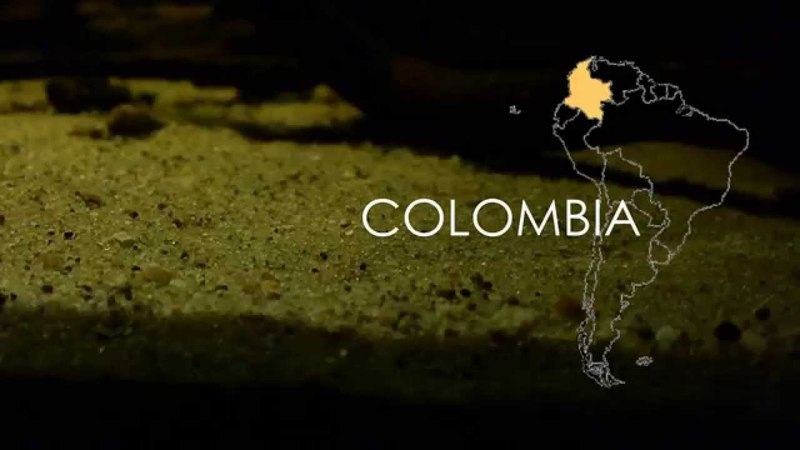 Colombia biotope Awaous flavus Eigenmannia virescens