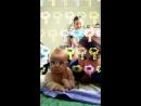 Snapchat-314772412.mp4