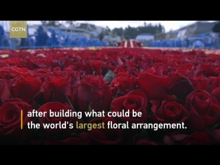 Пирамида из 500000 роз!