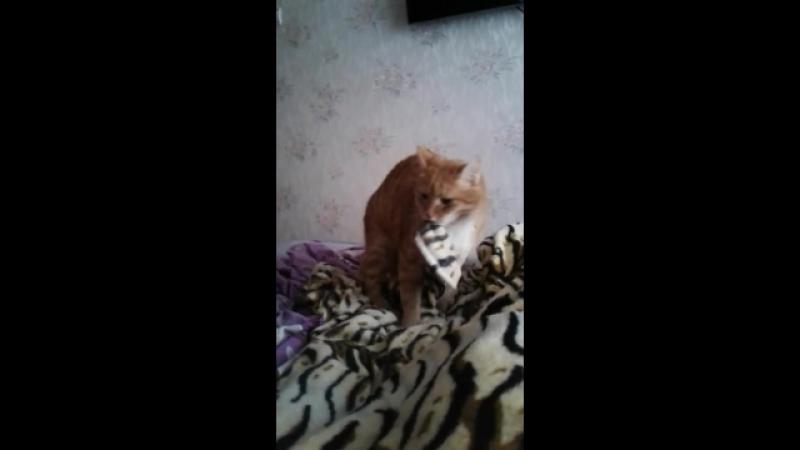 Мой кот рыжий шалун😂