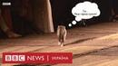 Мур мур Діор кіт вийшов на подіум під час модного показу