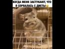 Animal_planet_vid_1_14082018_0745.mp4
