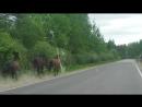 Долбанные лошади