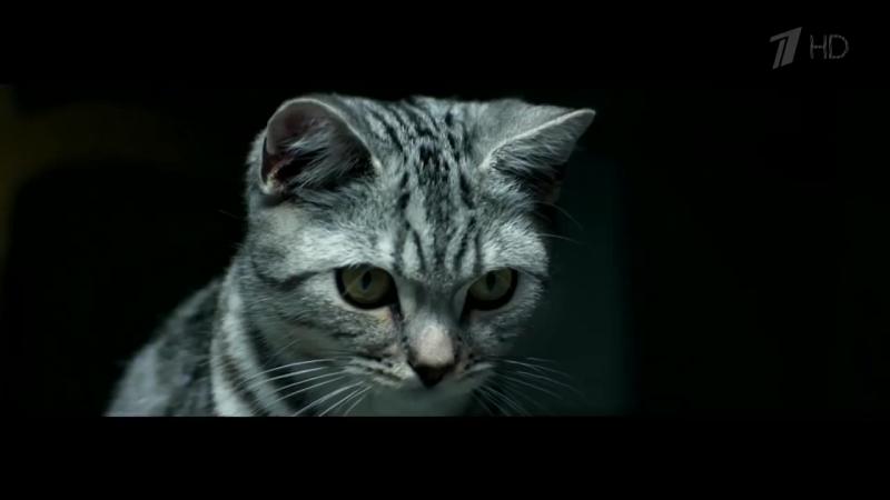 Реклама Whiskas _ Вискас - Кот и расческа