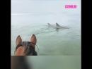 Лошадь и дельфины