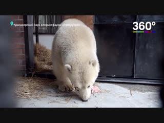 Новоселье белого медведя