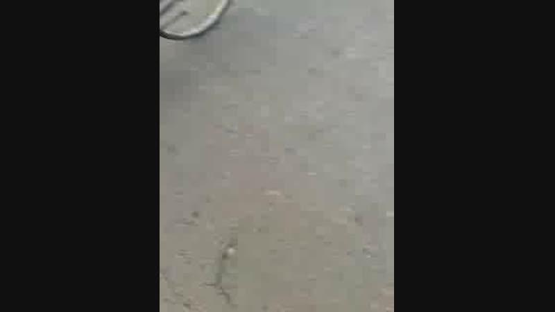 Video-2018-11-07-15-15-25