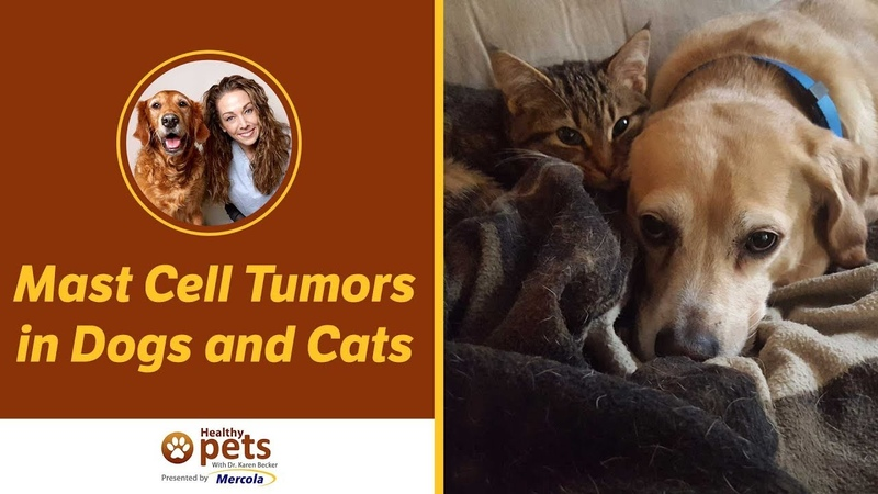 Мастоцитомы у собак и кошек Mast Cell Tumors in Dogs and Cats