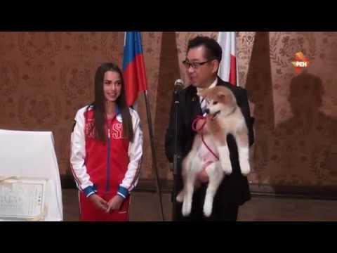 Видео Загитова не смогла скрыть эмоций получив японского щенка смотреть онлайн без регистрации