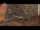 09.10.18 ТелеЗВЕРИ: скорпионы