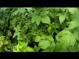 Рыбалка и грибы 26.08.18. Далматово-Исеть. Музыка F.D.Project - Heavensgate (2008)